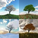 Les 4 saisons en concert